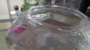Нано-робот рыбка в магазине Filament в Бердске