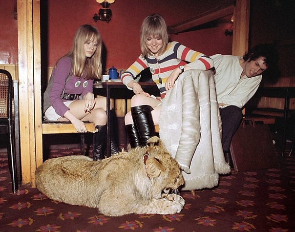 Это случилось почти 50 лет назад в Лондоне. Два молодых парня, Джон Рендалл и Эйс Берк, купили в универмаге Harrods львёнка. Не удивляйтесь: в 1969 году в крупнейшем лондонском универмаге