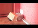 Смешные кошки Приколы КОТ 0085