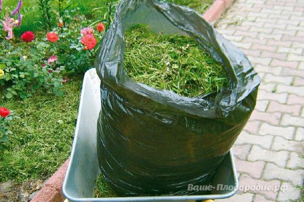 Уход за цветниками-мульча - скошенная трава
