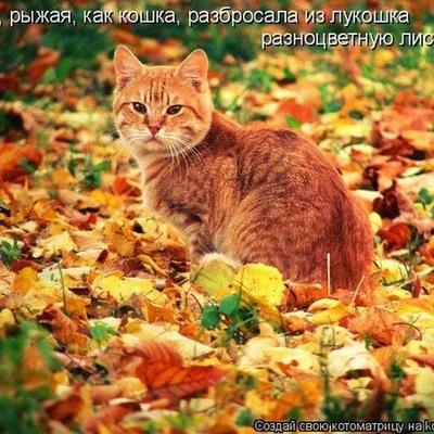 Светлана Суханова, 10 ноября 1997, Лысьва, id198802802