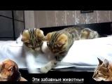 Приколы про кошек 2014 Cats fun 2014