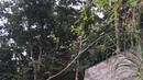Pássaro Canto Expressivo. Quintal, Tiguera 360, Juiz de Fora, BR. IMG_9780. 99,2 MB. 16h30. 08jul18
