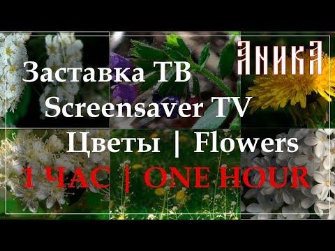 Заставка ТВ. Цветы. 1 час (Screensaver TV. Flowers. 1 hour). Макросъемка (macro shooting)