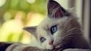 Видео Что чувствуют кошки, когда их обижают ? Xnj xedcnde.n rjirb? rjulf b[ j,b;f.n