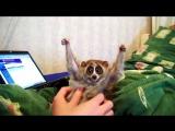 Экзотические детёныши животных. Забавные животные