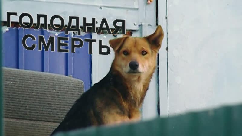 Уголовное дело о жестоком обращении с животными открыли в Амурской области