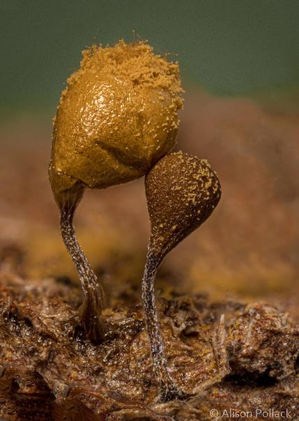 Фотограф Alison Pollac делает экстремальные макроснимки, чтобы показать, насколько завораживающими могут быть грибы