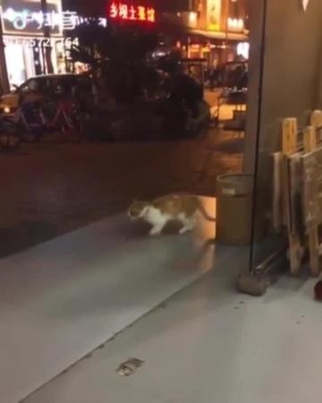 Cat moonwalk