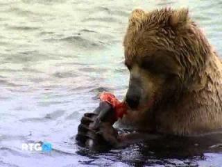 Документальный фильм про Русских Медведей