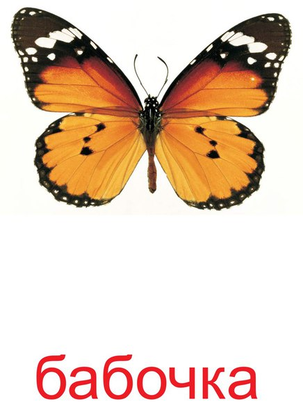 Бабочки с надписью картинки, телефон