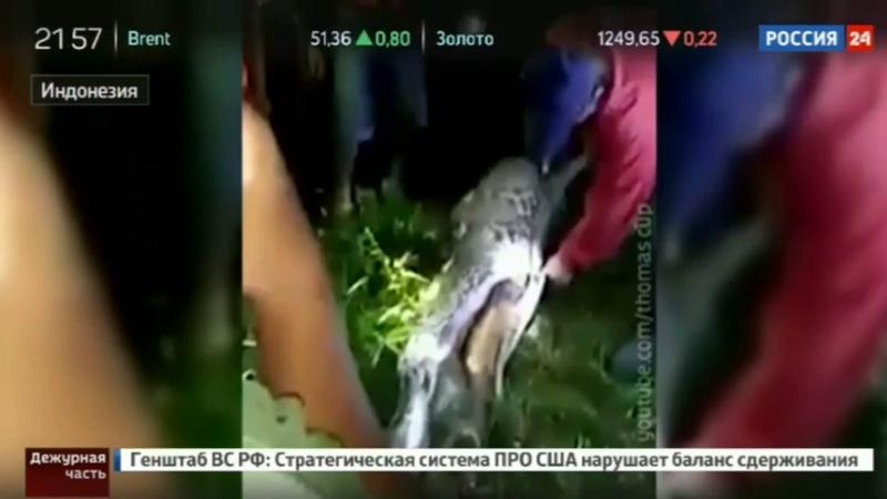 В Индонезии мужчину проглотил огромный питон