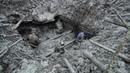 🔴 Раскопки немецкого блиндажа WW2 metal detecting German Dugout