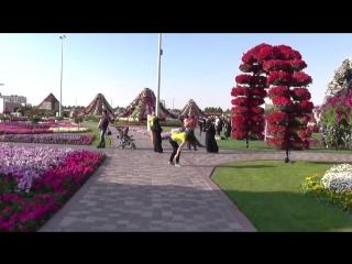 Парк цветов в дубае (dubai miracle garden)-школа цветоводства