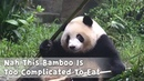 How To Start This Bamboo Meal ? Nah This Bamboo Is Too Complicated To Eat | iPanda