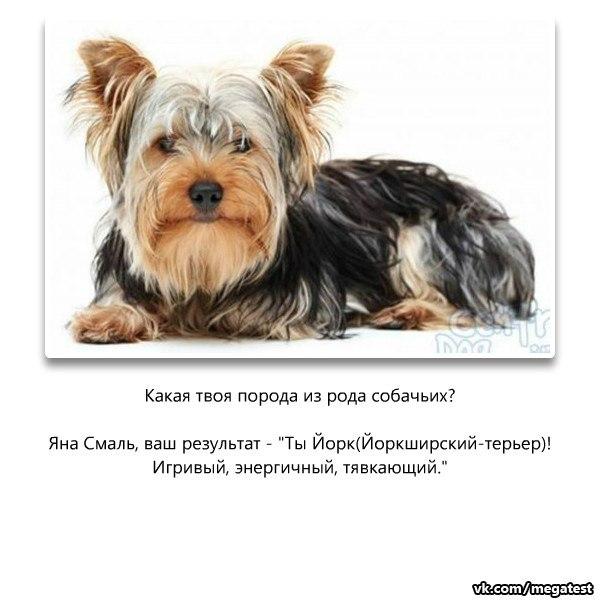 ИГРУ COUNTER-STRIKE XTREME V5 РУССКИЙ КОНТР СТРАЙК ЭКСТРИМ 2011 ЧЕРЕЗ