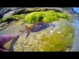 Донузлав: подводный мир (Крым, клип снят на GoPro и AEE Magicam SD21)