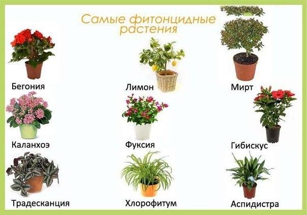Полезные цветы для дома - какие комнатные цветы должны 89