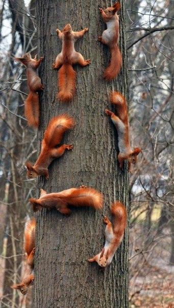 Движение в области дерева крайне затруднено