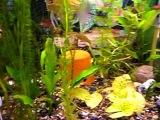 Мой аквариум на 200 л.(релаксация)