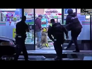 Police dogs catch suspect in real action