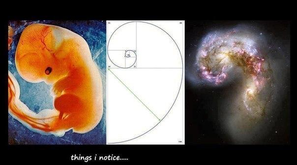 Говорят, это портрЭт нашей Вселенной (схема Фибоначчи) .