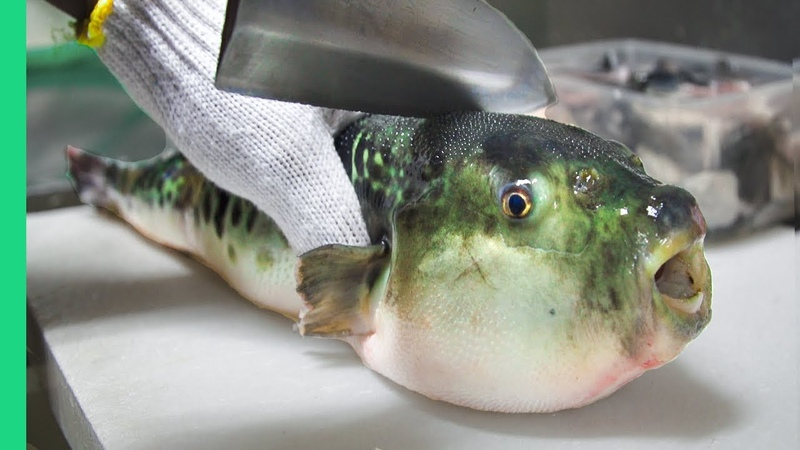Eating Japan's POISONOUS PufferFish ALMOST DIED *Ambulance*