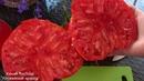 Томат Бабушкино, вкусный , крупный и урожайный сорт - - любимец дачников