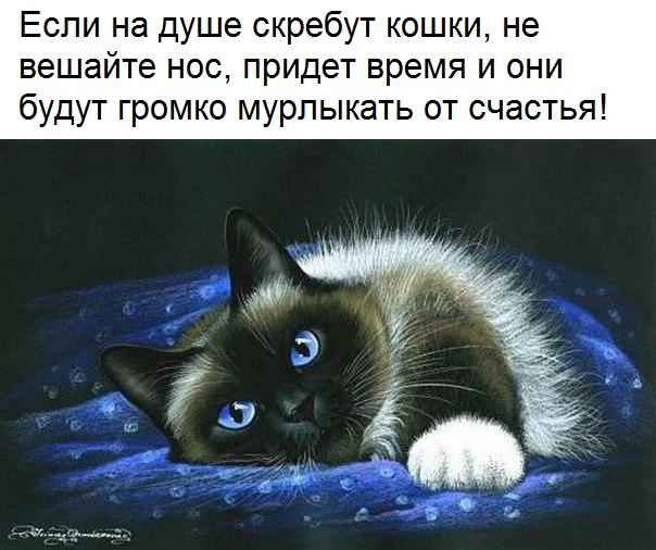 https://pp.userapi.com/c7001/v7001567/2ec28/f4stQgiJA7k.jpg