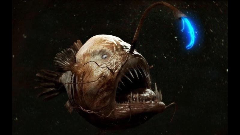 Исчадия ада Глубоководный удильщик морской чёрт