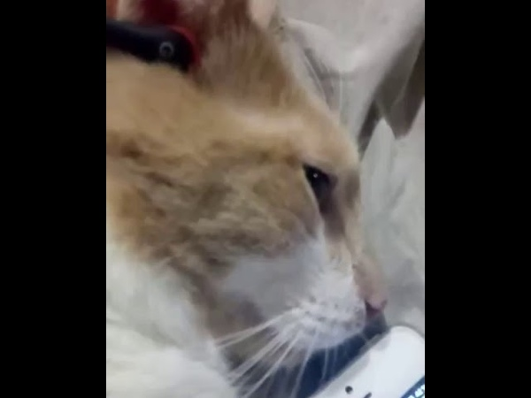 1271). 05.02.2016 - Котик Мэлман живет дома (видео из дома)