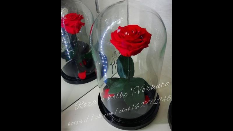 розыгрыш розы в колбе
