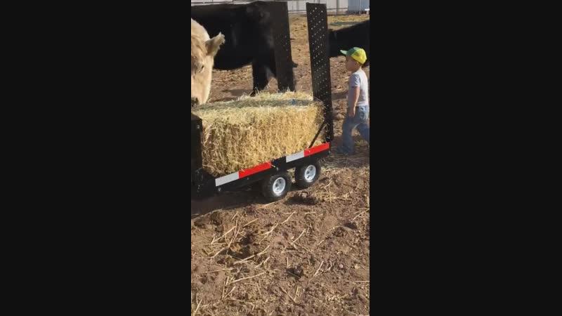 Little farmer feeding livestock