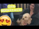Первая встреча собачки и её хозяев после долгой разлуки!