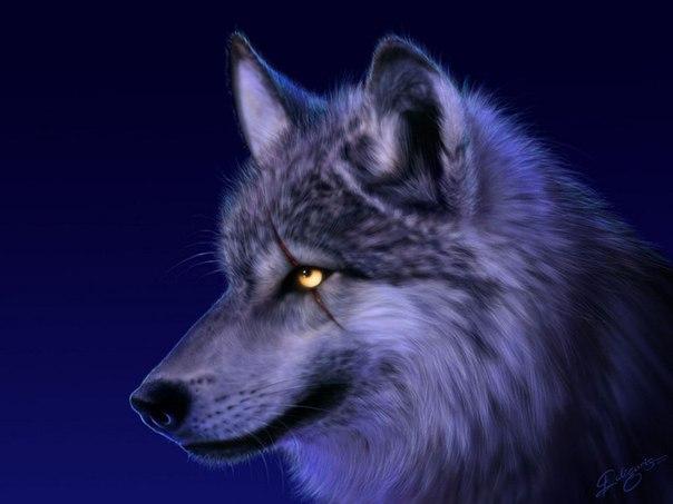 bez rubriki  Христианская притча: Верующий волк