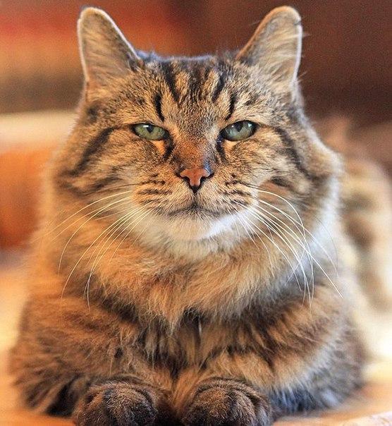 Знакомьтесь – самый старый кот в мире