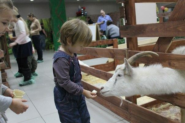Контактный зоопарк в Тушино