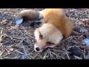 Video_39582.mp4