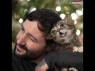 Тайна самой популярной кошки раскрыта!
