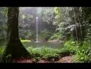 Звуки леса релакс
