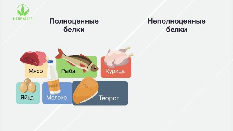 Белок – основа сбалансированного питания человека