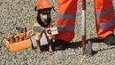 Четвероногий бригадир: той-терьер на страже ремонта дорог