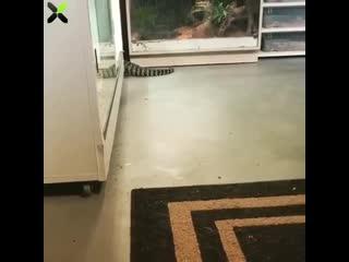 Рептилоид поймал мешочек с золотом