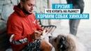 Грузия. Туристы кормят собак хинкали. Что привезти из Грузии? Рынок в Кутаиси.
