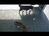 Брошенные щенки. Остановка Командор(Новостройка)