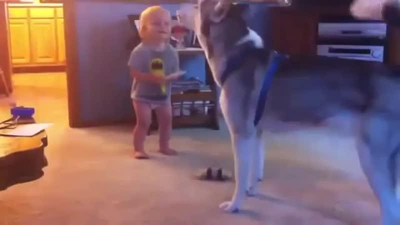 Веселая игра ребенка и собачки