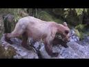 Медведи на рыбалке 0002