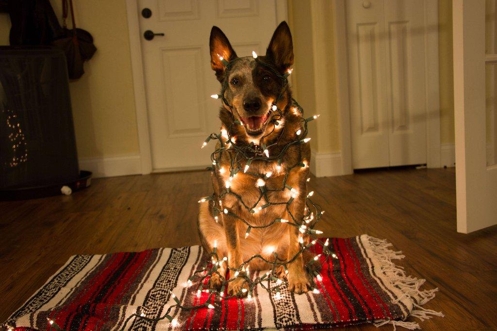 Рождественские издевательства над псом