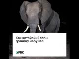 Как китайский слон границу нарушал