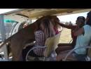 Туристы сняли на видео самого любвеобильного льва в Крыму Лев Филя сафари парк